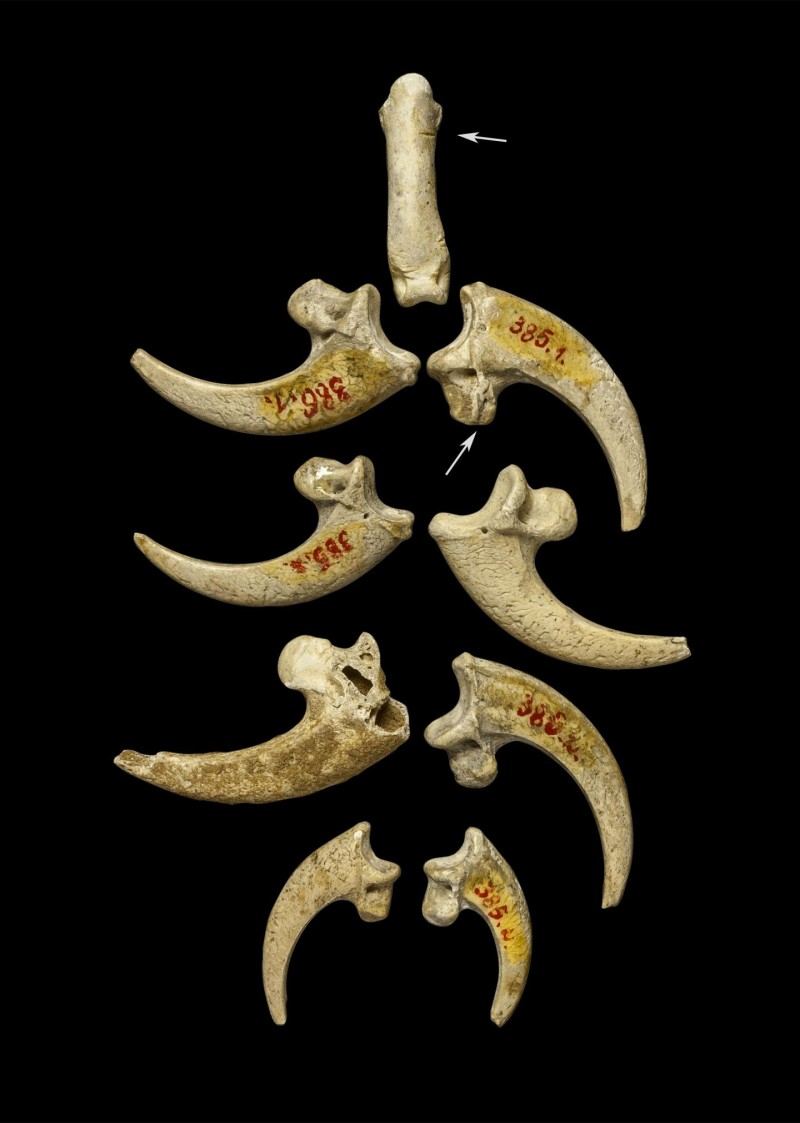 Neanderthal jewelry?