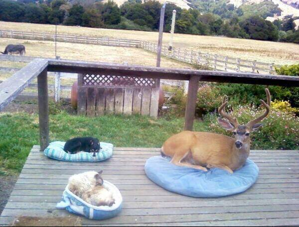 The buck shows up every day so they got him a bed