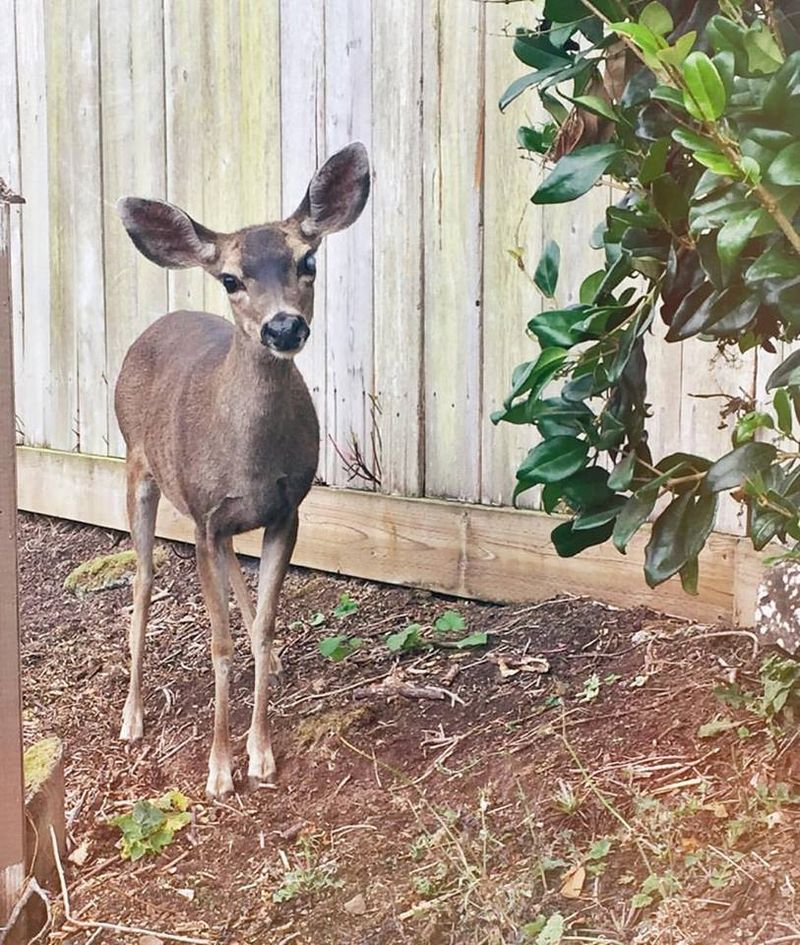 Robin's deer buddy