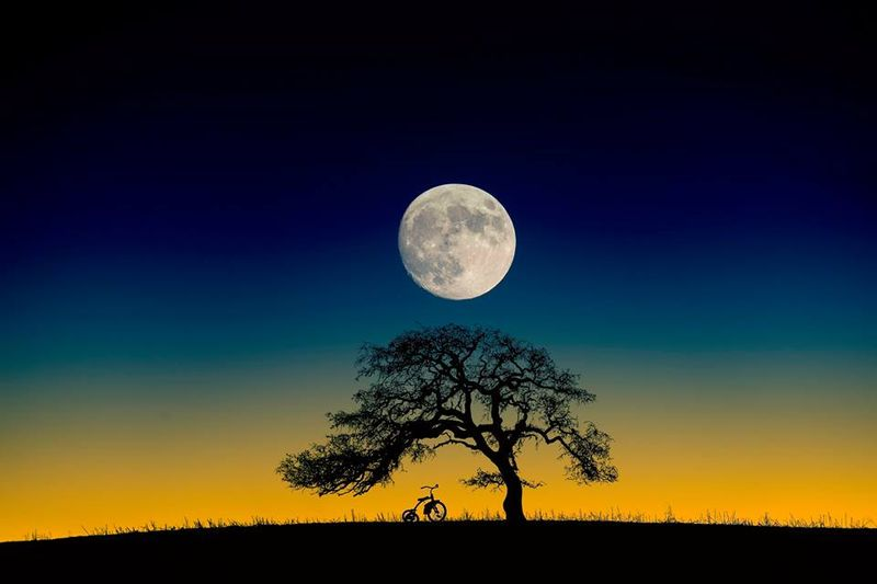 Rusty the tricycle with tree and moon