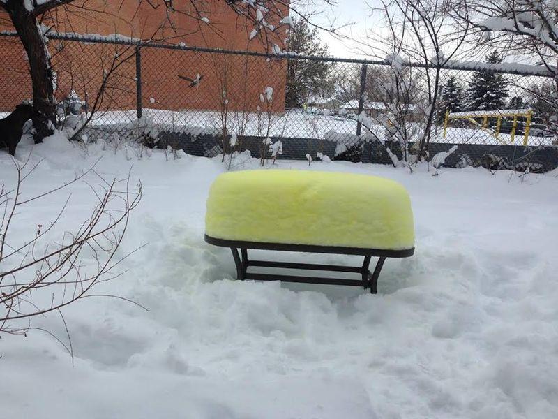 Snow twinkie in Colorado