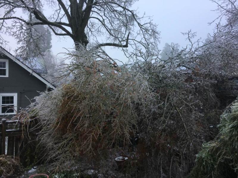 The tree next door in our backyard
