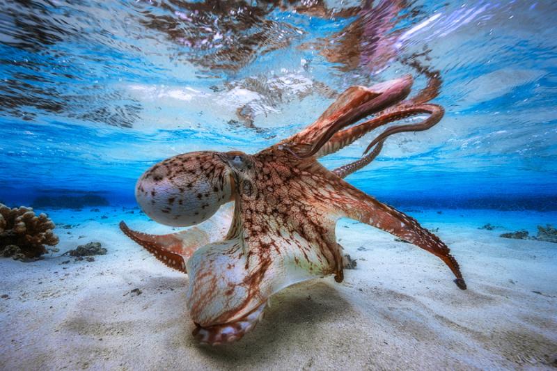 Octopus dancing