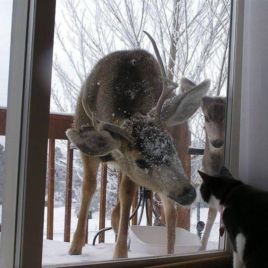 Deer on deck