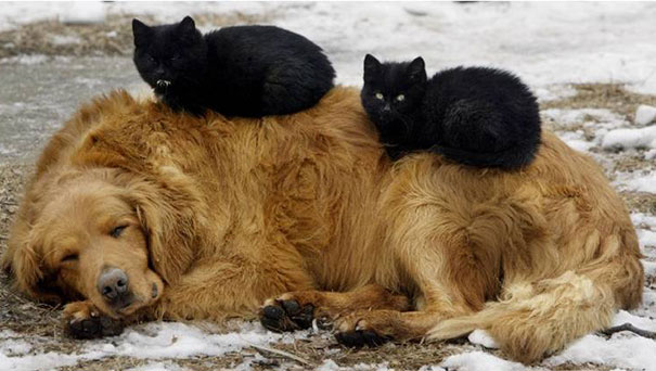 Cats on dogs 4