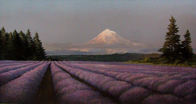 Lavender Festival  Clackamas County  Oregon