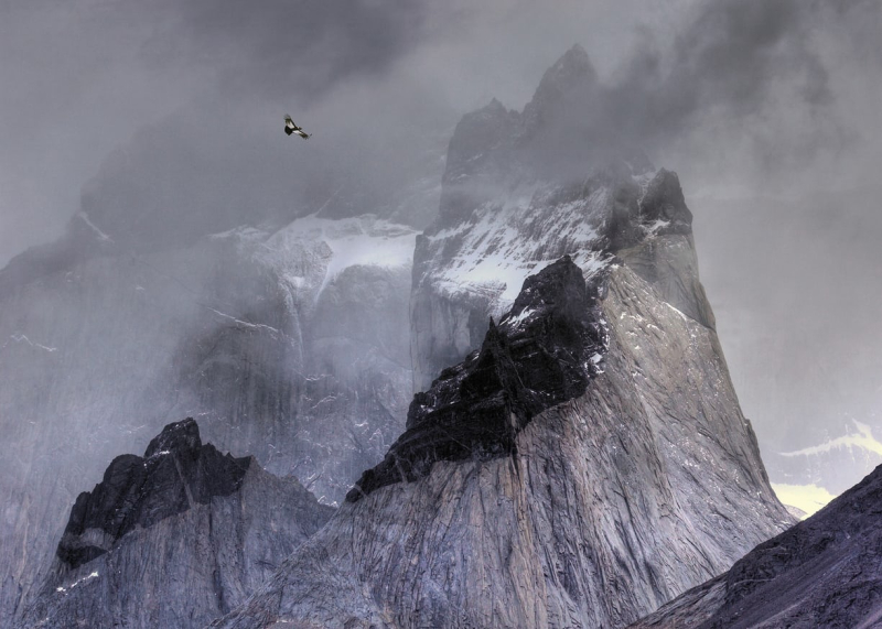 Condor over the Andes