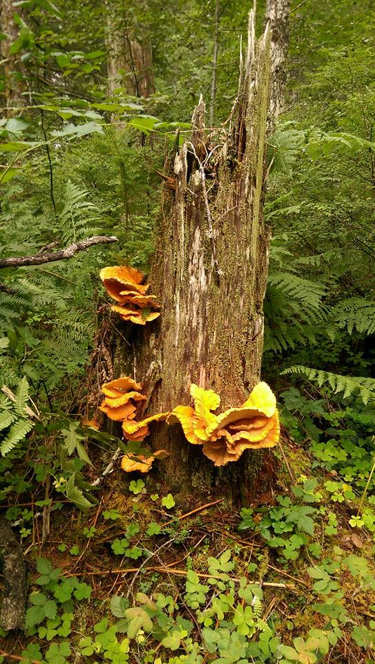 Orange fungus 1