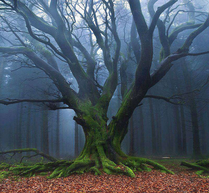 Tree in misty forest