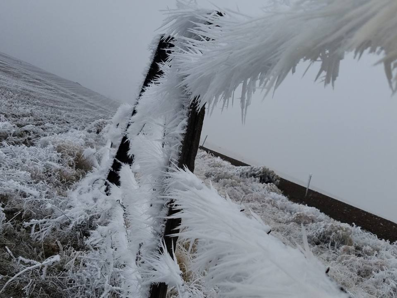 Ice on barbed wire 1