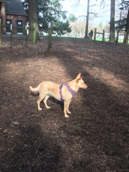 Iz at the park