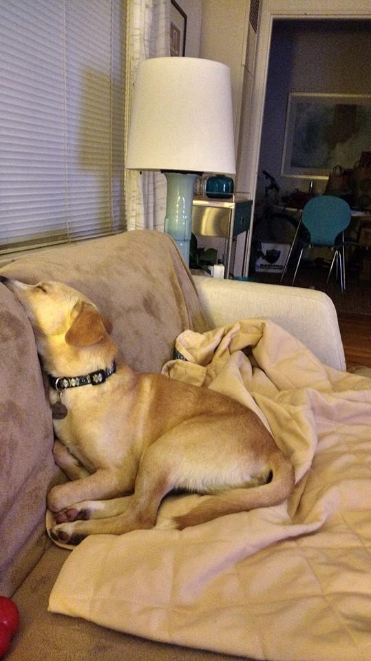 Strangely comfortable
