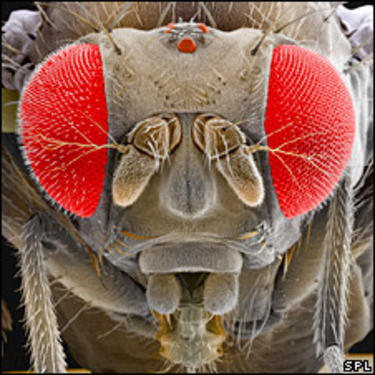 Mind control sex swap. Okay, in fruit flies. The story and videos are here.
